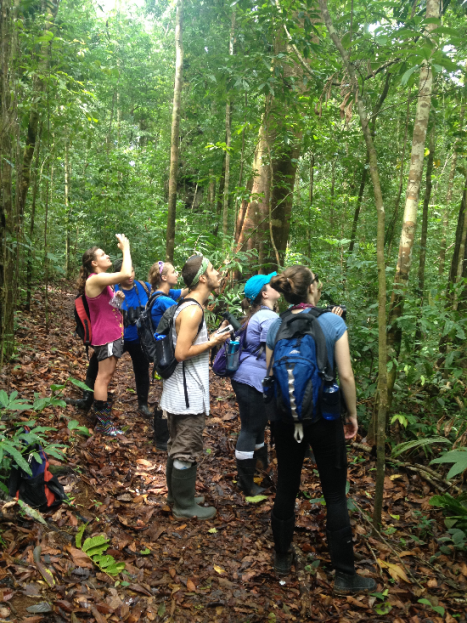 OCU Students in backpacks look to the forest canopy on a field expedition.