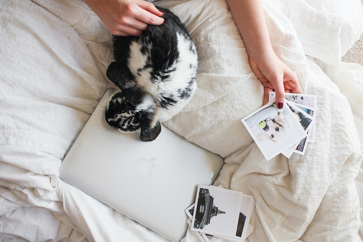 A small black and white rabbit lies on a bed as a human pets them.