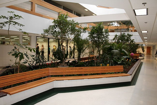 An indoor planter is filled with greenery inside the Lacy School